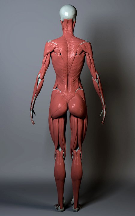Anatomy_2_ZBrushWorkshops_02.jpg