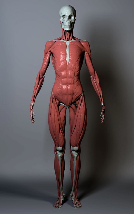 Anatomy_2_ZBrushWorkshops.jpg