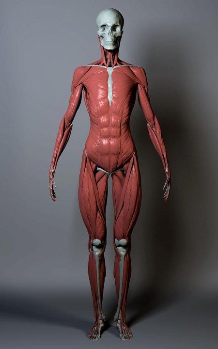 Anatomy_2_ZBrushWorkshops.jpg