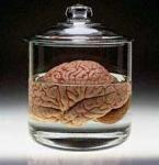 A Brain in a Vat's Photo
