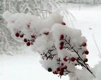 wintertime's Photo