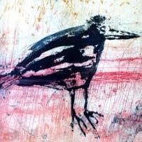 The Moldy Crow's Photo