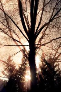 TreeSaaaaap's Photo