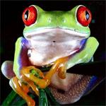 Cambo_frog's Photo
